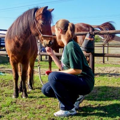 An intern works with a horse on one of our Animal Care internships abroad.